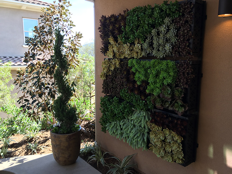 san-elijo-hills-community-house-with-succulent-garden-on-wall